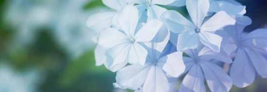 Les plantes toxiques et dangereuses de la Réunion
