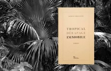 Tropical dérapage immobile